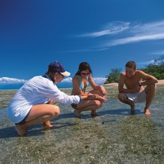 Take a walk around Low Isles with a marine naturalist on your luxury reef trip
