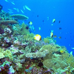 Pro Dive | Dive Trips Cairns | Liveaboard Great Barrier Reef Trips