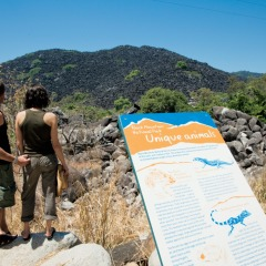 The Black Mountain stop on private charter tour to Cooktown