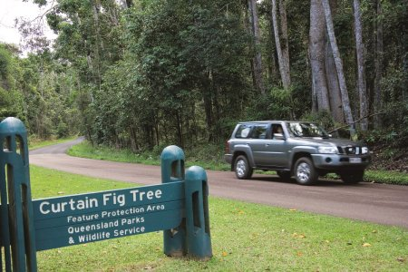Slef Drive to the Curtain Fig Tree Cairns, Australia