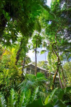 The perfect eco retreat hidden amongst the tropical Rainforest north of Cairns at Daintree Eco Lodge