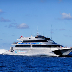 Return wavepiercer cruise to the Outer Great Barrier Reef | Departs daily from Port Douglas