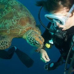 Cairns Dive & Snorkel Tour | Snorkel & Dive | Overnight Or Longer Private Charter Boat On The Great Barrier Reef