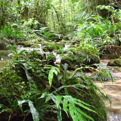 The World Heritage Rainforest | Full Day Tour | Small Groups | Departs From Cairns & Northern Beaches In Australia