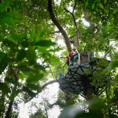 This is the ground view looking up to the Jungle surfing platforms high up in the Daintree Rainforest