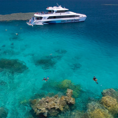 Travel to Agincourt Ribbon Reef daily from Port Douglas