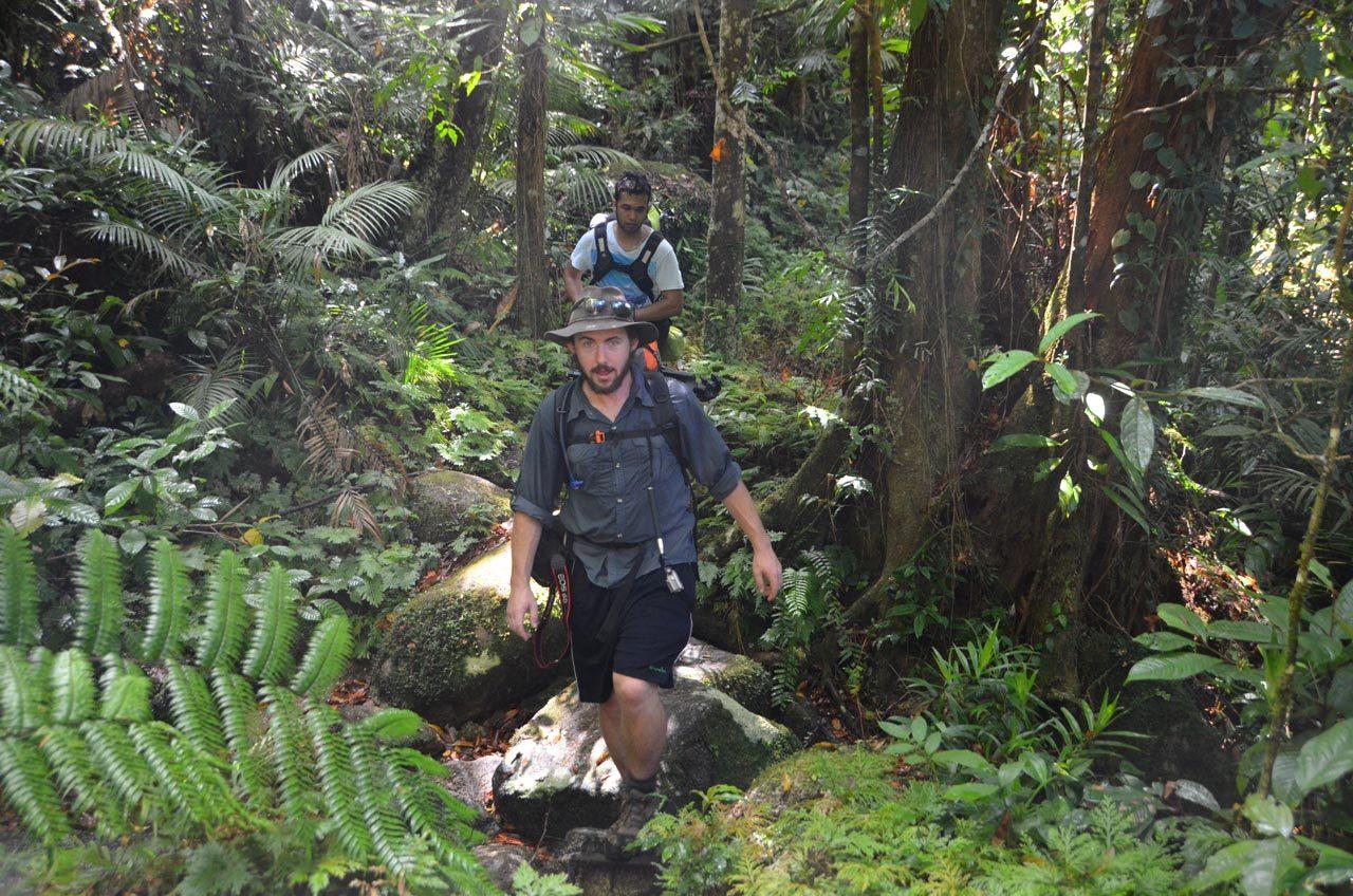 daintree rainforest mossman gorge hiking tour cairns hiking tour