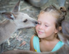 Tropical North Queensland Wildlife | Fun For Young Children And Adults