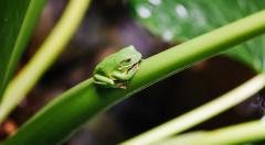 Tropical Rainforest friends - Daintree Eco Lodge & Spa