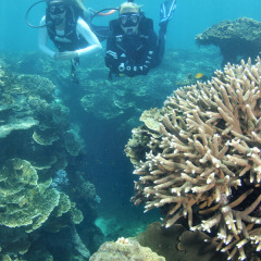 Try an introductory scuba dive on the Great Barrier Reef pontoon