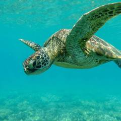 Turtle Photographed with Underwater Camera Hire Cairns