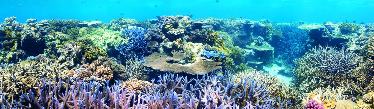 Snorkel & Scuba dive tours Cairns Great Barrier Reef