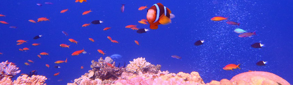 Underwater Camera Hire Cairns Great Barrier Reef
