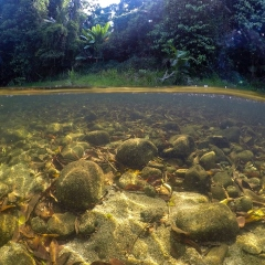 Underwater View of Mossman River