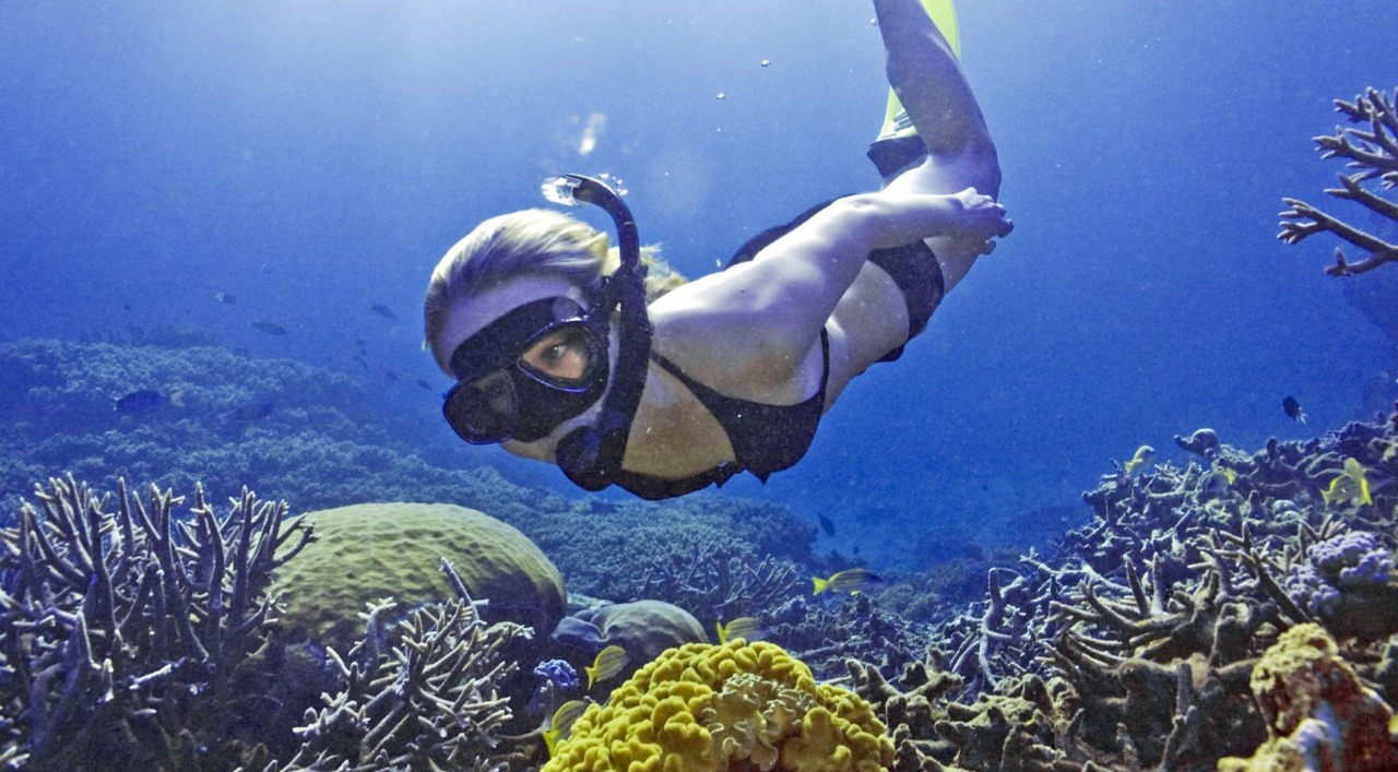 Best Diving Tour Great Barrier Reef