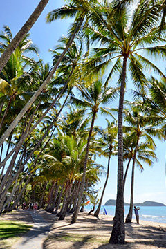 View of the beachfront esplanade in Palm Cove