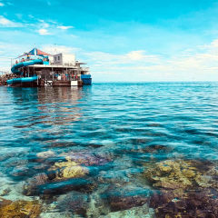 View of the coral and the Great Barrier Reef pontoon