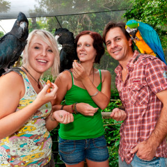 Visit Birdworld In Kuranda Village | Cheapest Kuranda Trip Incl Discount Vouchers To Kuranda Parks
