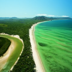 Visit Cape Tribulation Tropical North Queensland 1 Day Tour