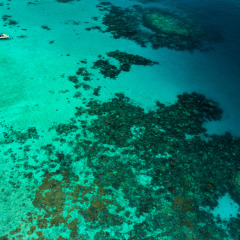 Visit Mackay Reef On The Great Barrier Reef Off Cape Tribulation