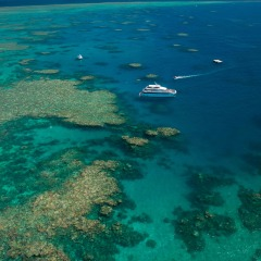 Visit Norman & Saxon Reefs | Great Barrier Reef Tour From Cairns Australia