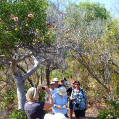 Visit Stanley Island In Flinders Group National Park | Cruise Cairns To Darwin
