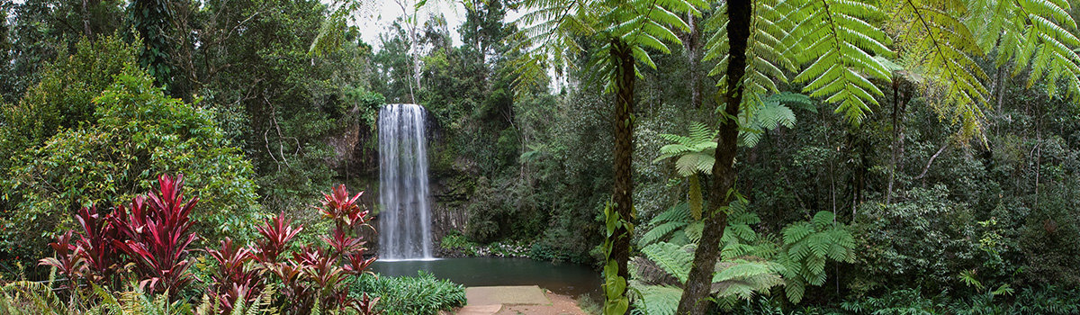 Visit stunning waterfall locations on your Cairns Queensland rainforest tour