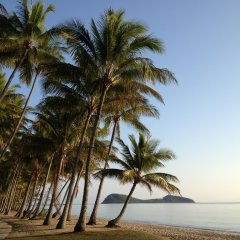 Visit the beautiful village of Palm Cove Australia