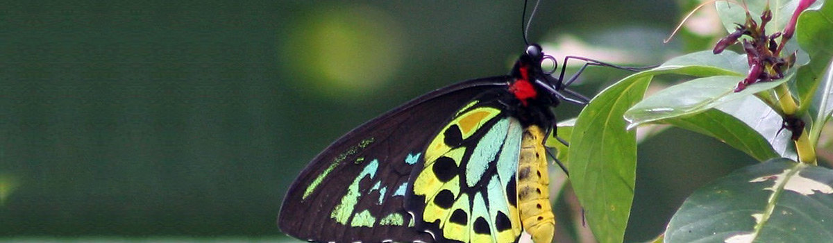 Visit the butterfly sanctuary on your Kuranda and Rainforestation day tour