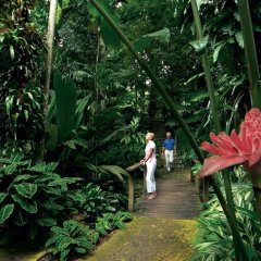 Visit the Cairns Botanical Gardens