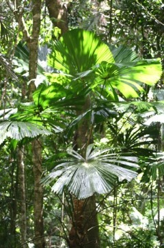 Visit the Daintree Rainforest from Port Douglas