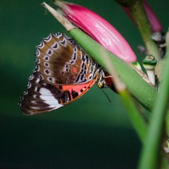 Visit The Largest Living Collection Of Butterflies In Australia | Great Value Kuranda Day Trip Ex Cairns