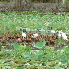 Visit the wetlands of Cairns for bird watching