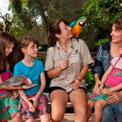 Visit the wildlife attractions in Kuranda Village