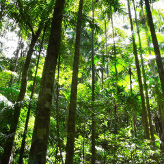 Visit The World Oldest Living Rainforest | 1 Day Tour From Port Douglas Tropical North Queensland