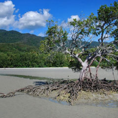Walk on the remote beaches in the Daintree rainforest