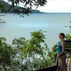 Walk the boardwalks of the Daintree & Cape Tribulation Rainforests