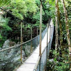 Walk the scenic boardwalk trails around Mossman Gorge