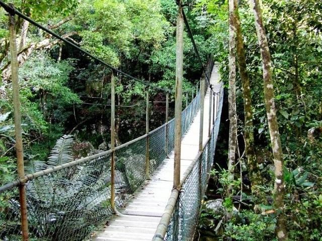 ... Walk the scenic boardwalk trails around Mossman Gorge Daintree Rainforest Cape ... & Daintree Rainforest Tour | Cape Tribulation Via Mossman Gorge ...