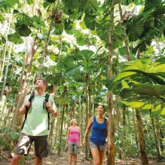 Walk thru the Daintree Rainforests and Mossman Gorge in Tropical North Queensland Australia