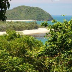 Walk to the scenic lookouts at Cape Tribulation and take photos