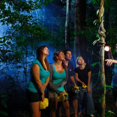 Walk with a rainforest guide who will point out all the unique attractions of the rainforest