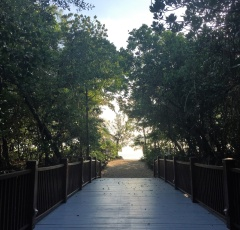 Walkway from the Resort to Palm Cove Beach