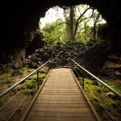 Walkway in the Undara Lava Tubes is suitable for everyone