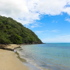 Wander the remote Cape Tribulation Beach