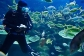 Watch the scuba divers presentation in the Cairns Aquarium