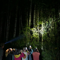 We see nocturnal animals in the forests of Cairns at night
