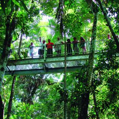 We take you on elevated boardwalks in the Cape Tribulation and Daintree Rainforests