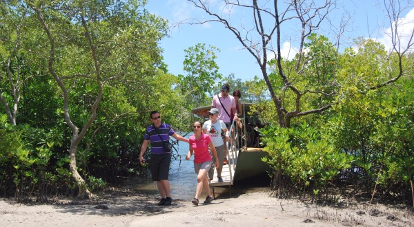 Wildlife River Cruise | Small Group Day Tour From Port Douglas