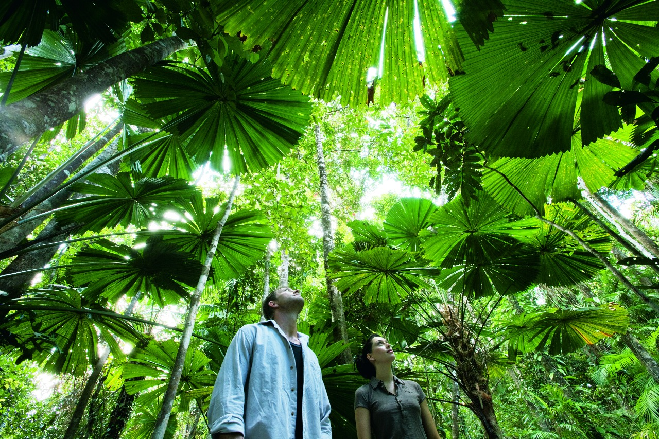 visions of a rainforest a year in australias tropical rainforest